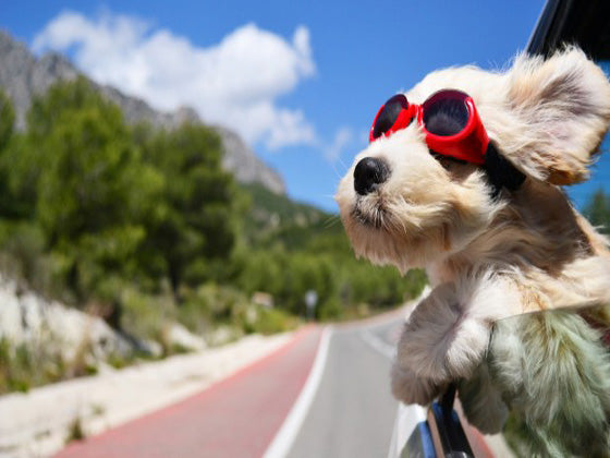 Best Day Trip Checklist For Your Pet