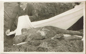 Germany Morbid WW II Postcard of exhumed body, To be given a decent burial.