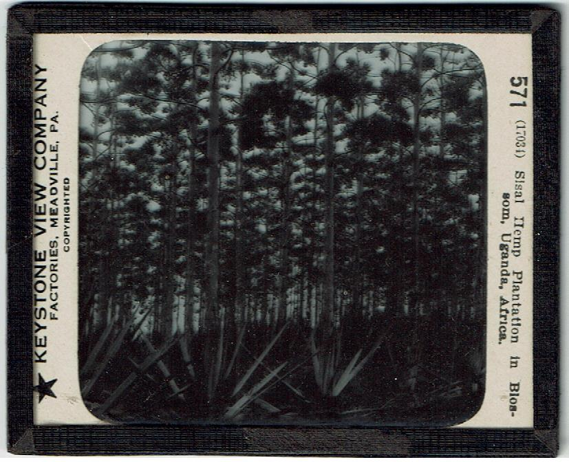 Keystone View Company Glass Slide Hemp Plantation Uganda Africa