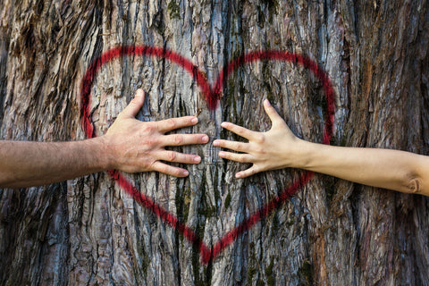 couple touching heart drawn on tree