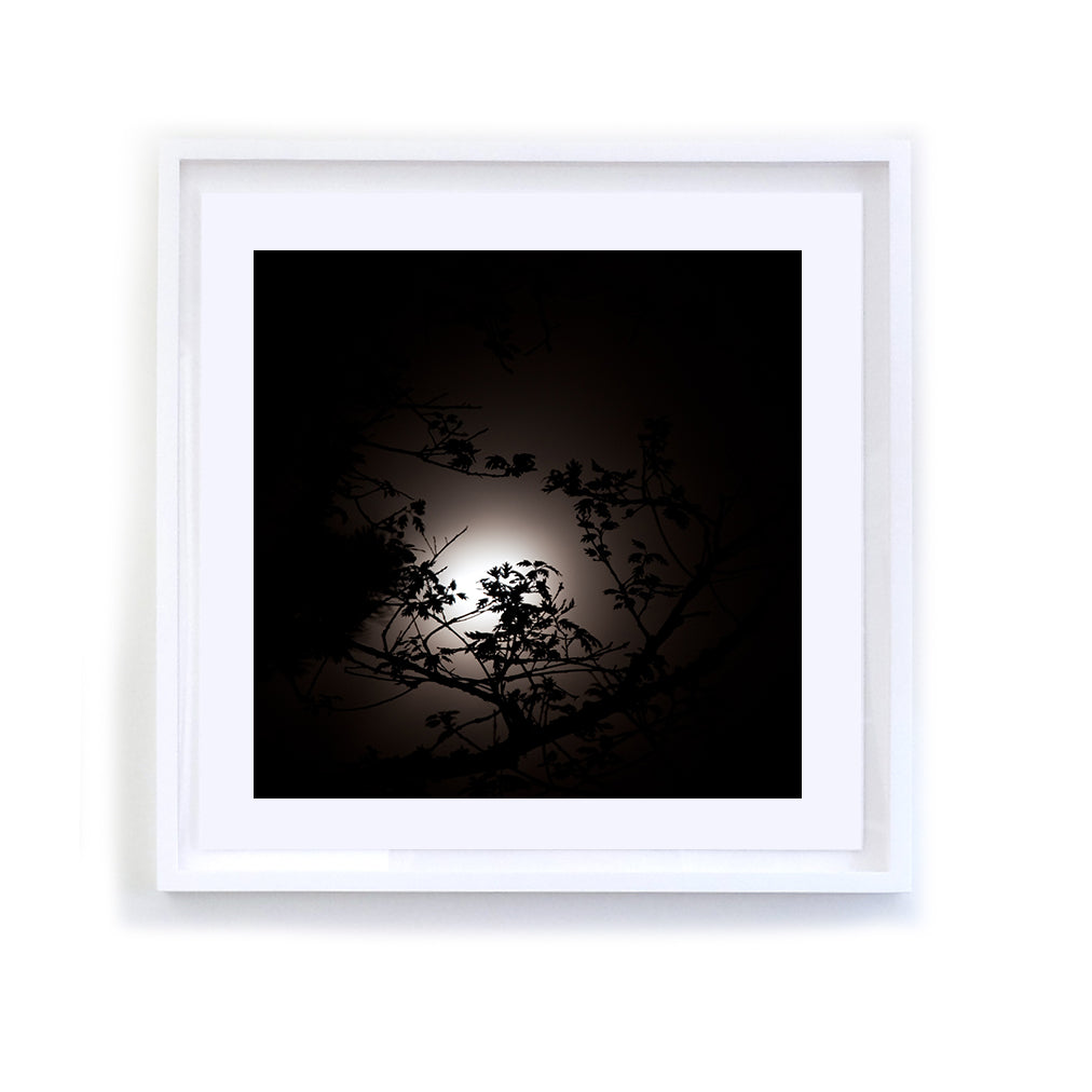Branches and Moon, Framed
