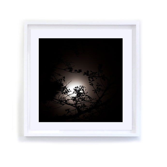Backlit Branches, Framed