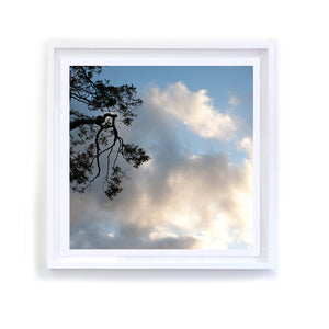 Branches in the Heavens, 5, Framed