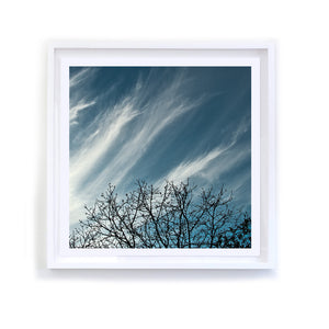Branches with Cloud Wisps, Framed