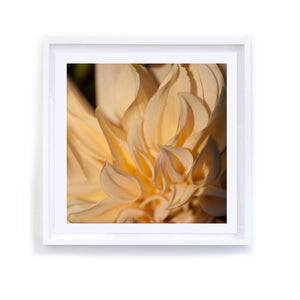 Golden Dahlia, Framed