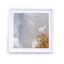Load image into Gallery viewer, Iceberg Rose, Framed