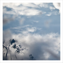 Load image into Gallery viewer, Branches in Clouds and Fog, Framed