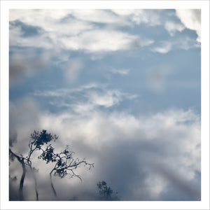 Branches in Clouds and Fog, Framed