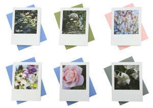 Floral Greeting Cards (Set of 6)