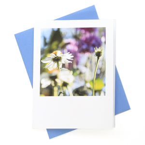 Pow Wow White Echinacea Greeting Card