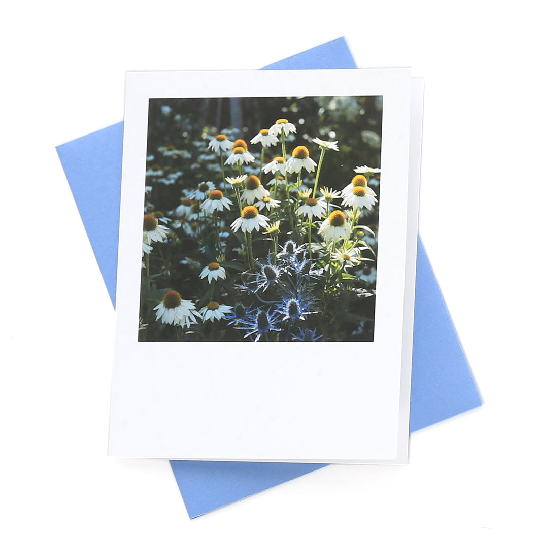 Echinacea Bloom Greeting Card