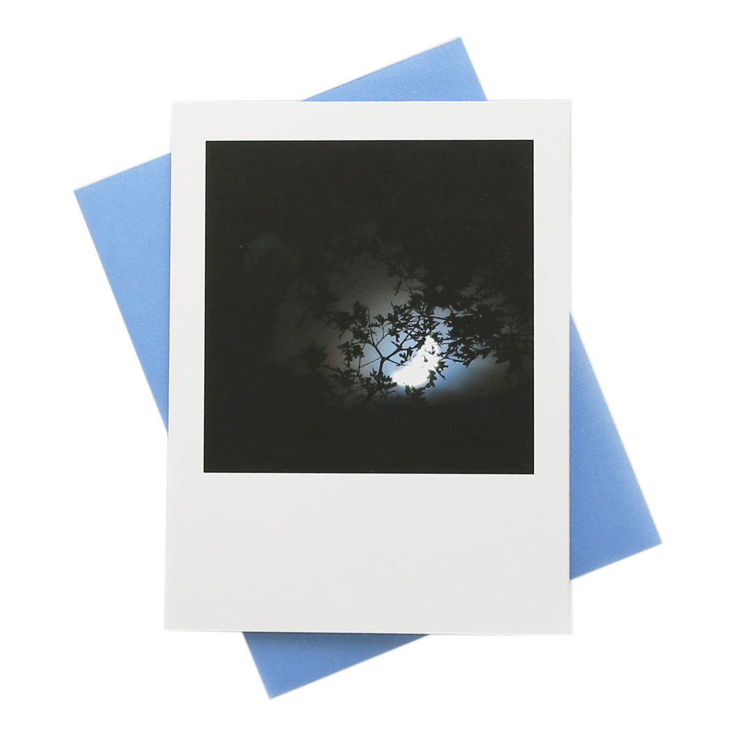 Nocturnal Greeting Card