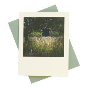 West Sussex Evening Light Greeting Card