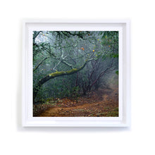 Load image into Gallery viewer, Napa Trail, Framed