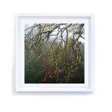 Load image into Gallery viewer, Napa Pink and Green Branches, Framed