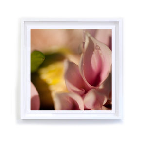 Pink Dahlia with Raindrop, Framed