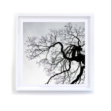 Load image into Gallery viewer, Winter Ridgewood Oak, Framed