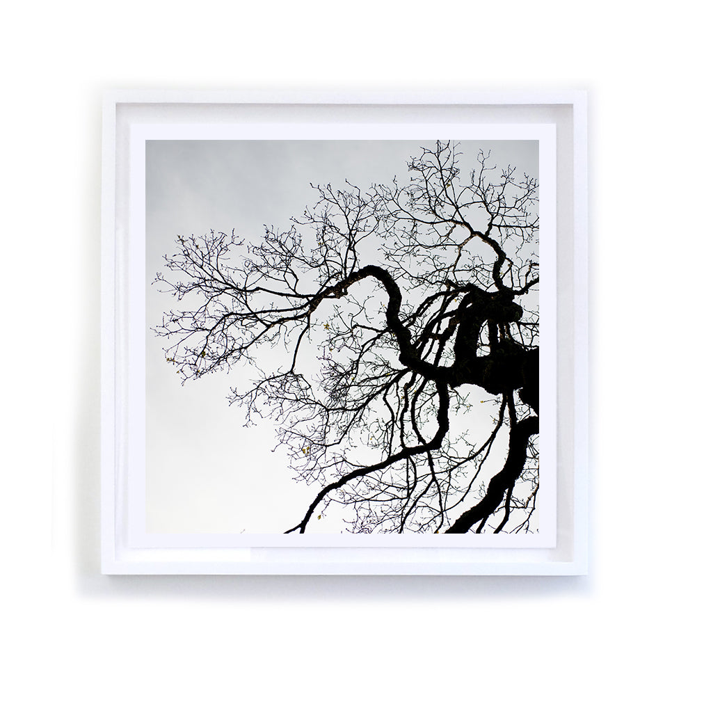 Winter Ridgewood Oak, Framed