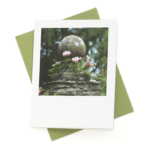Climbing New Dawn Roses Greeting Card