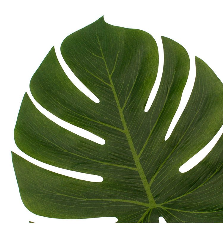 Small Tropical Monstera Leaves