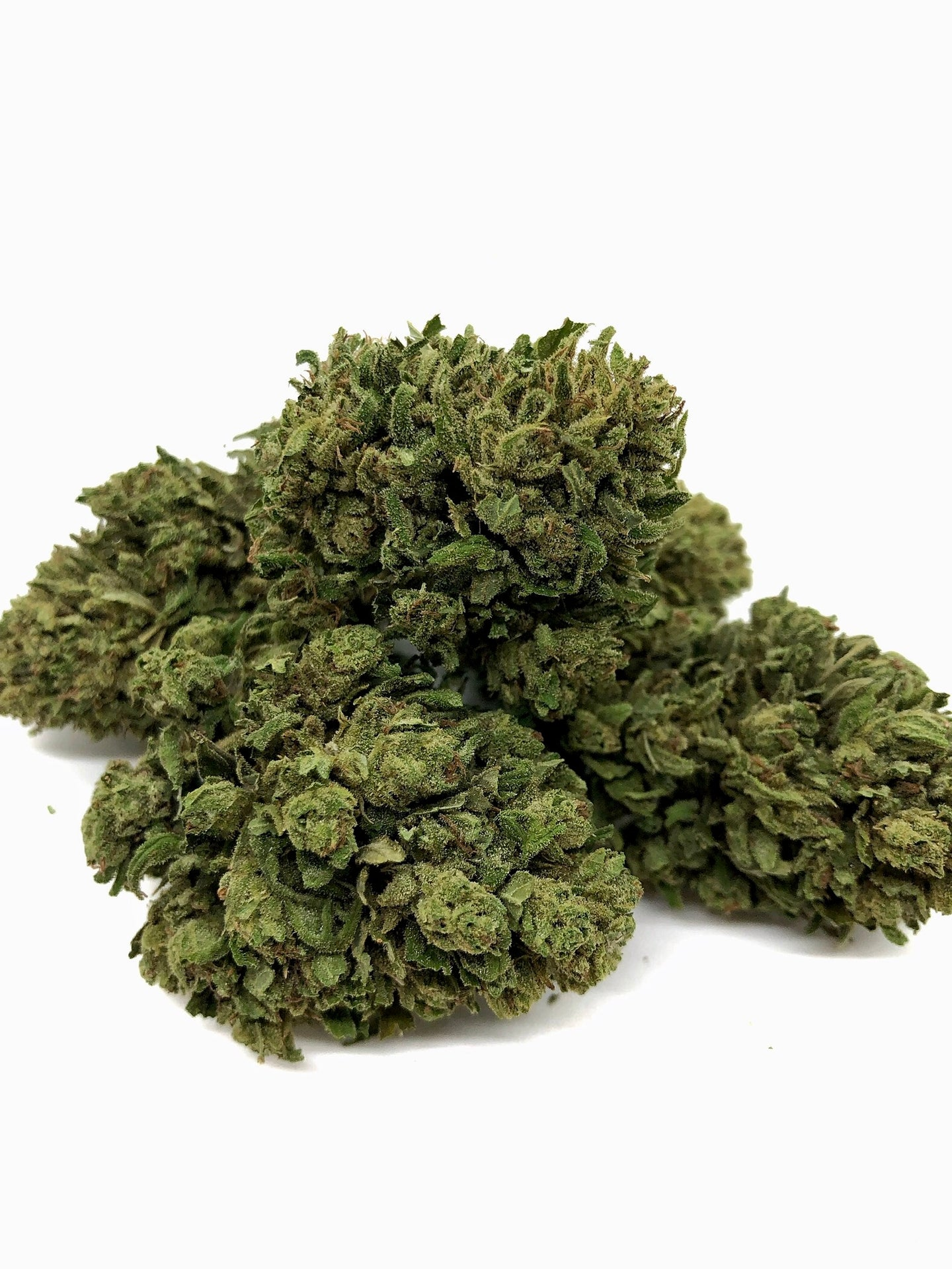 Therapy (Hybrid) - 1lb