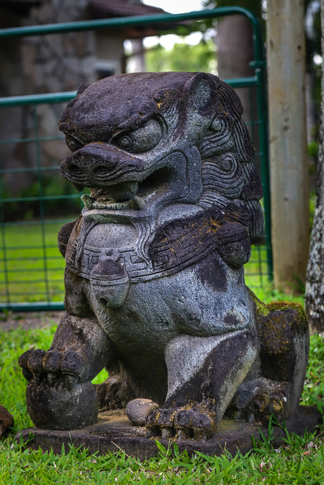 Large hand carved lava rock fu dog male weathered aged stone yard statue