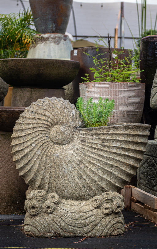 nautilus stone hand carved planter