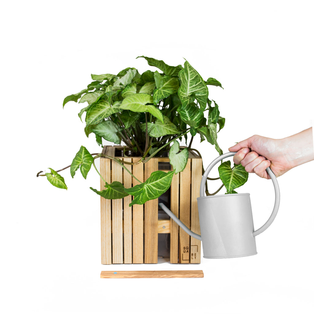 Sustainable Danish design self-watering wooden plant boxes, made out of up-cycled materials