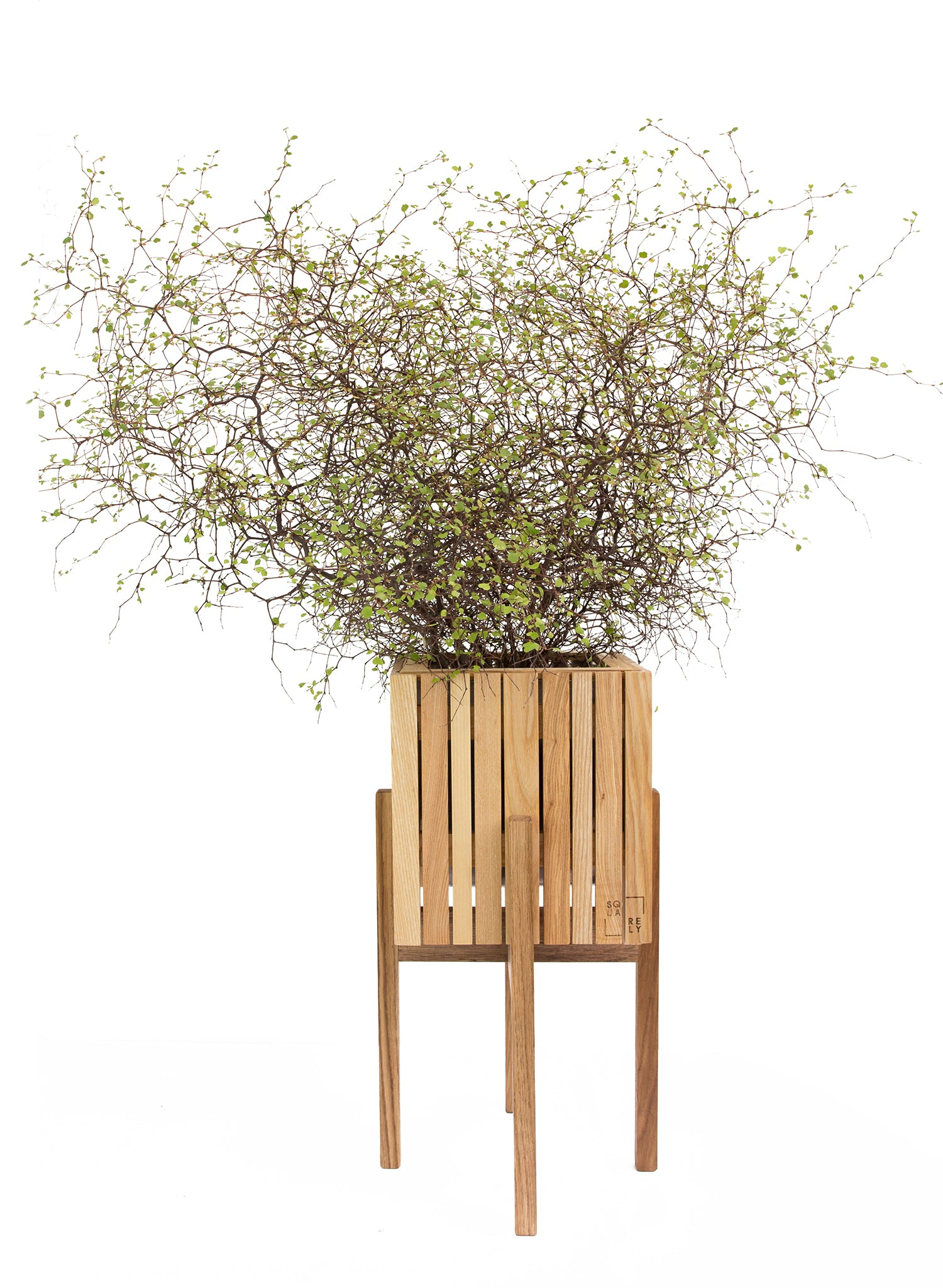 "SQUARELY's wooden design planter ""GrowOn + StandOn Natural Ash"" whit a plant on white background. GrowOn is SQUARELY's smaller, wooden, sustainable design planter with self-watering system."
