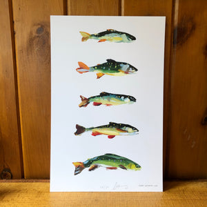 Steven Weinberg Trout Print