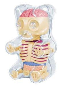 4D Master Baby Gummi Bear Skeleton Anatomy Model