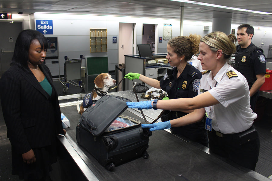Miami Heat and the Helsinki Airport Uses Dogs to Sniff Covid-19