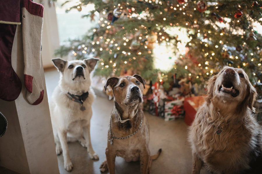 Dealing with Your Dog's Holiday Stress
