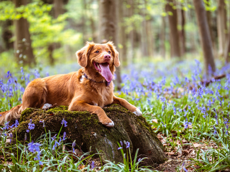 Dog Spring Allergies: Prevention and Treatment