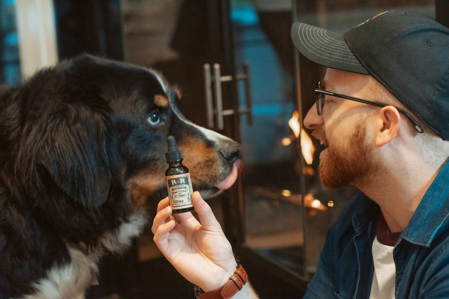 CBD Oil for Your Dog: Is it Safe?