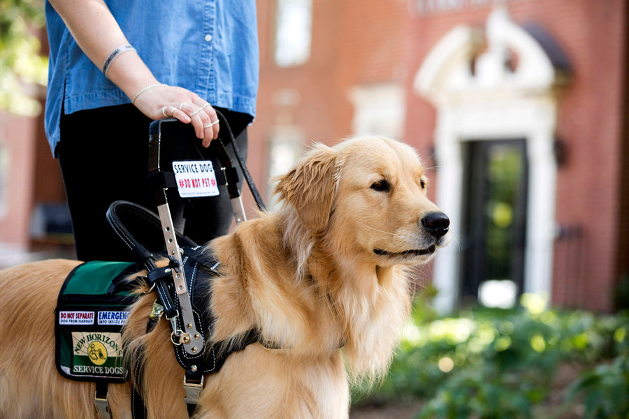 Obstacles for Service Dogs During COVID-19