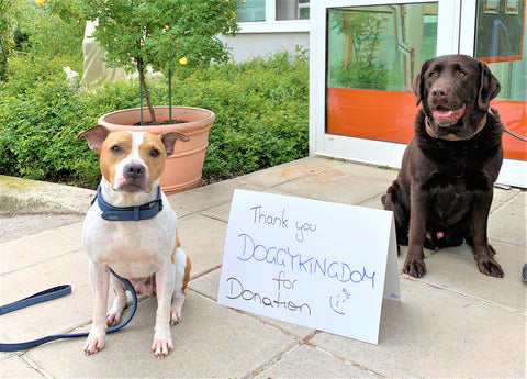 2 Dogs with a donation sign. DoggyKingdom is donating to several places to help dogs.