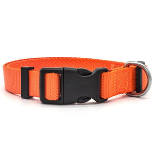 Orange high quality nylon dog collar with stainless steel D-Ring.