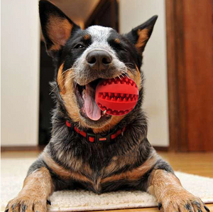 Doggykingdom® 2in1 Tooth Cleaning Chew Dog Ball & Toy