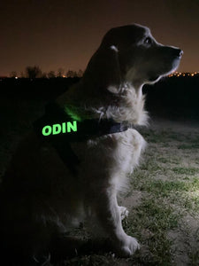 Glow in Dark Custom velcro label / patches for Dog Harness by Doggykingdom®