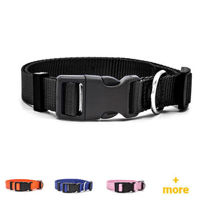 Overview of high quality nylon dog collars in color black, orange, blue and rosa.