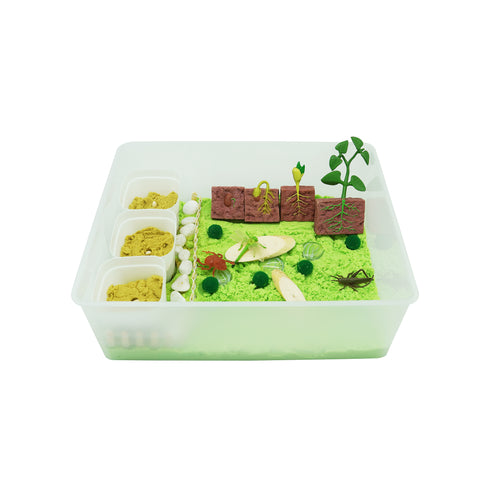 Bean Plant Life Cycle - Evolution Box - Elbirg