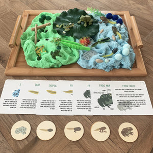 Frog Life Cycle - Evolution Box - Elbirg