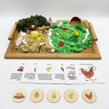 Load image into Gallery viewer, Chicken Life Cycle - Evolution Box - Elbirg