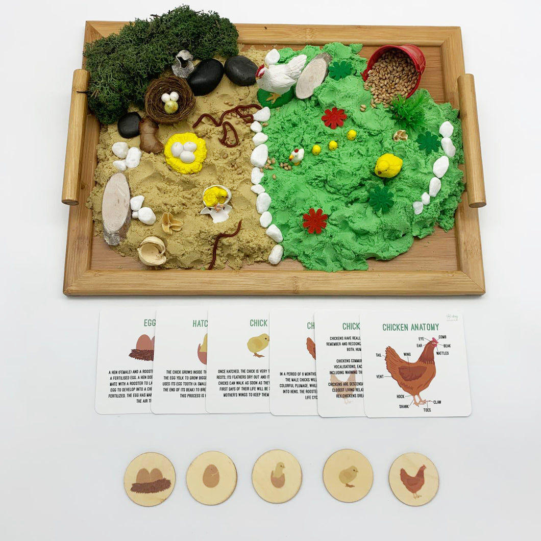 Chicken Life Cycle - Evolution Box - Elbirg