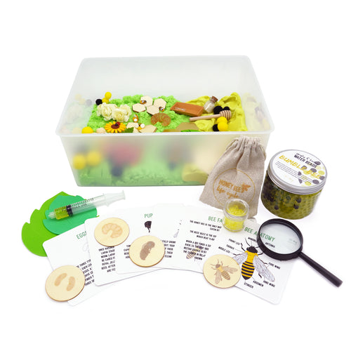 Bee Life Cycle - Evolution Box - Elbirg