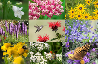 ~ Pollinator Garden Kit  - Full Sun to Part Sun Moist to Medium Soil