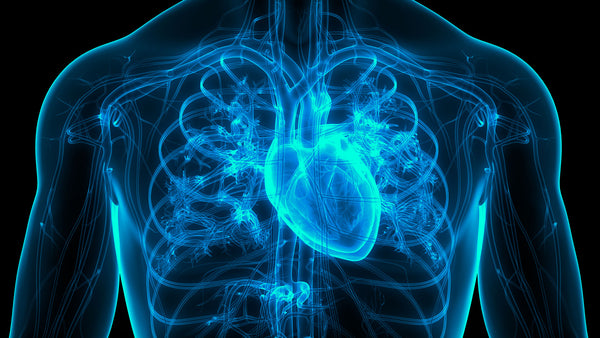 The Nampt/NAD+ Axis may be a Potent Therapeutic Target for Atrial Fibrillation