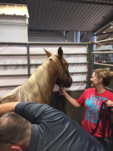 Integrated Equine Sports Therapy Session