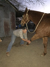 Load image into Gallery viewer, Integrated Equine Sports Therapy Session